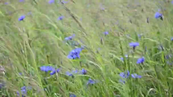Video B67524759