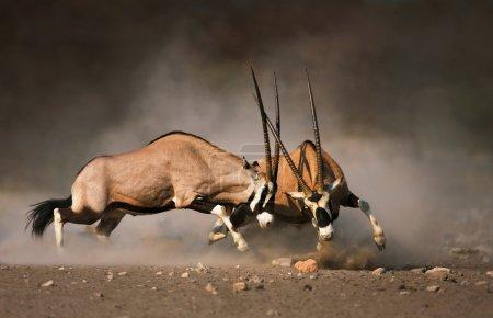 niemand aktion tier maennlich gefaehrlich afrika