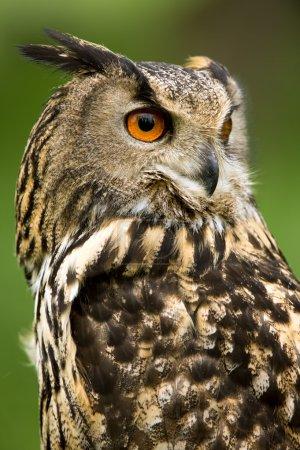 im freien natur tier tierwelt vogel