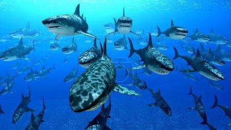 tier tierwelt fisch ozean unterwasser laenge