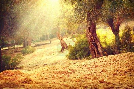 Hintergrund, Kunst, Sonne, im Freien, Natur, Garten - B113666754