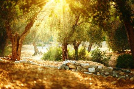 Hintergrund, Kunst, Sonne, im Freien, Natur, Garten - B113665444