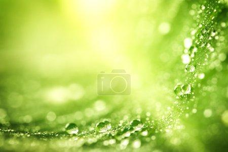 grün, Hintergrund, dynamisch, Makro, Design, schön - B53317611