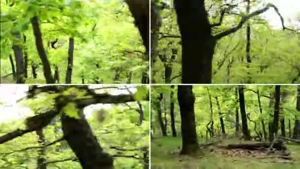 Video B71270193
